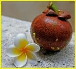 Mangosteen and frangipani