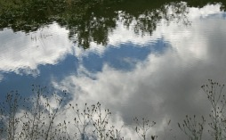 Pond ripples with cloud reflections