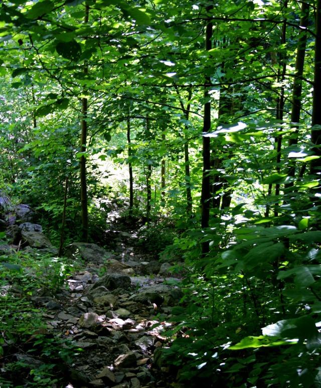 Down a rocky path