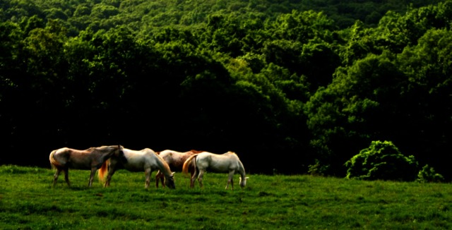 Four horses along the ridge