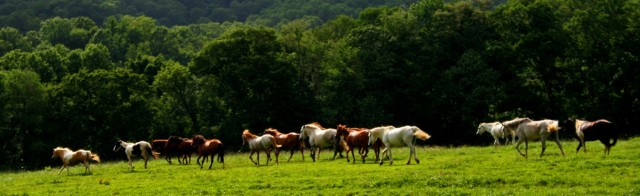 Horses along the ridge