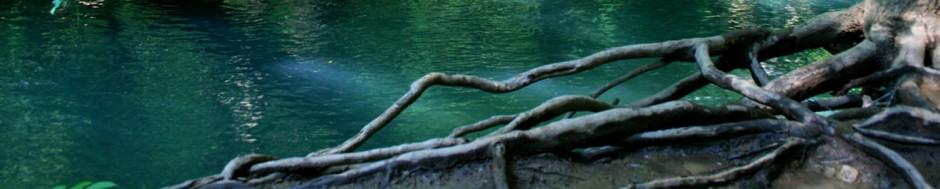waterhole header