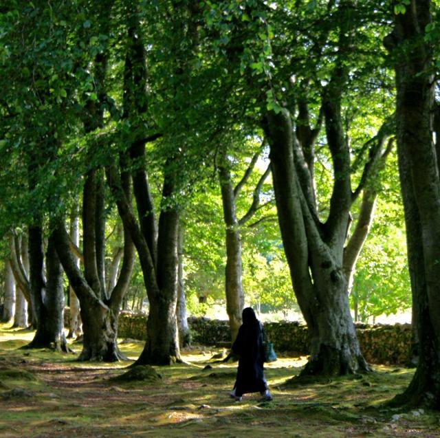 Asma walking under old trees