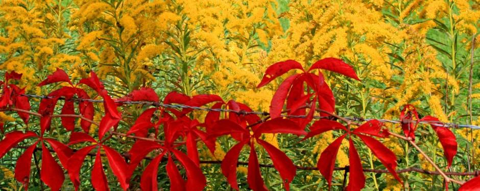 hedgerow header
