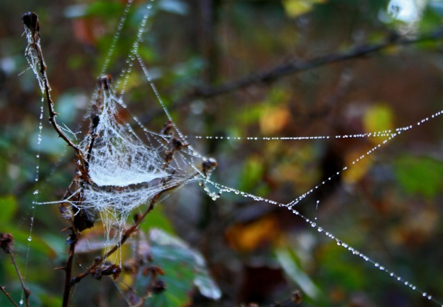 luminous web in tree