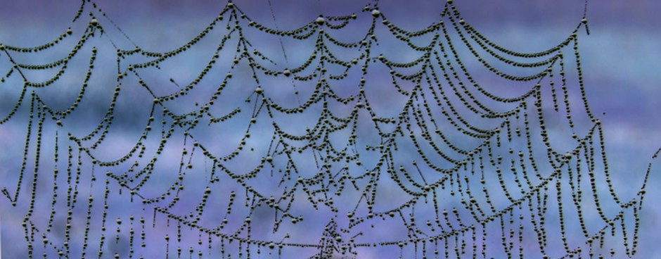 spiderweb header