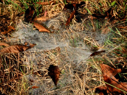 spiderweb on ground