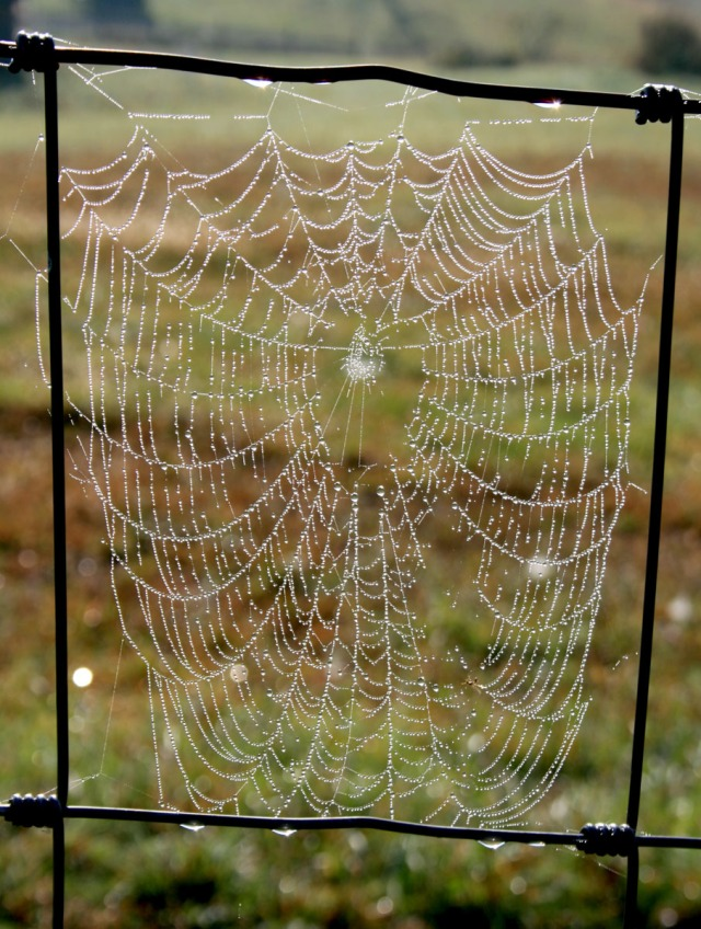 the first spiderweb
