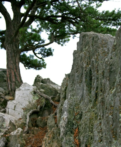 Tree growing on rock, West Virginia