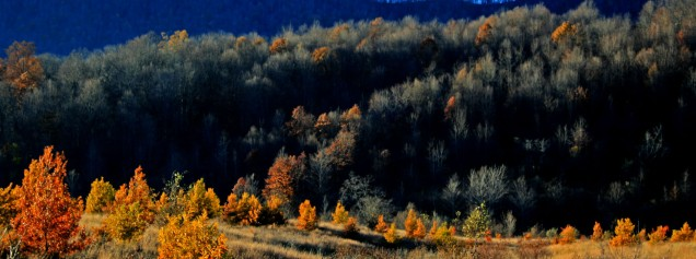 a line of golden trees
