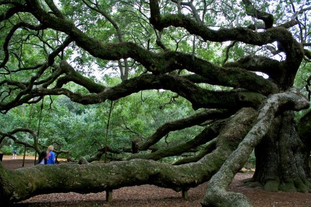 girl in blue under tree