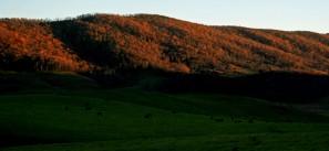 goodnight Blue Grass Valley