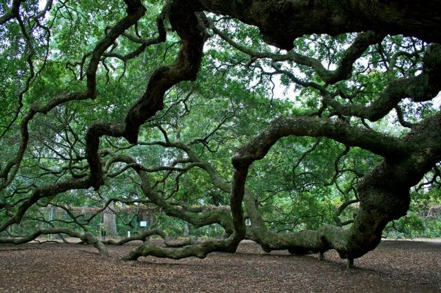 under heavy branches