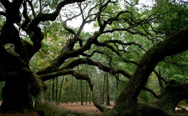 woods surrounding angel tree