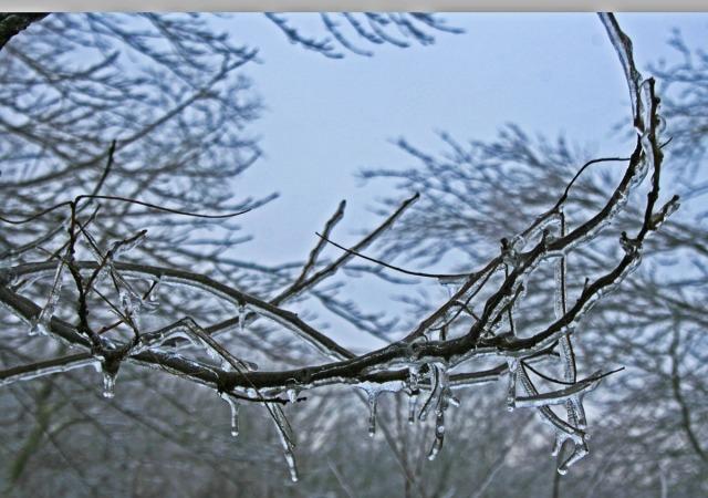 Branch encrusted
