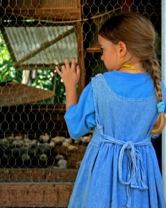 Girl watching baby chicks