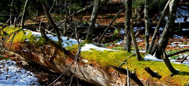 mossy limb