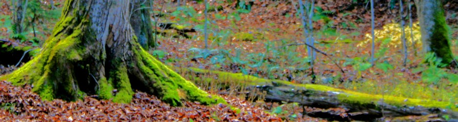 mossy treetrunk header
