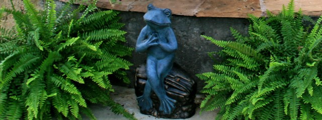 Frog among ferns
