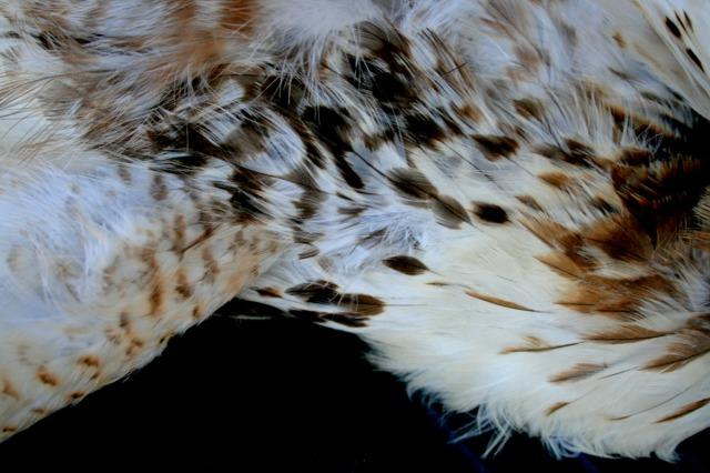 plumage detail