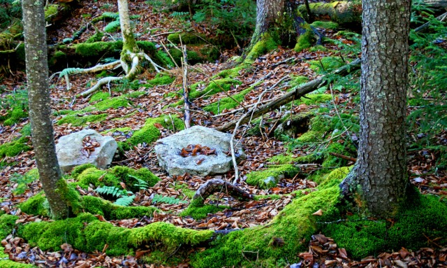 rocks, roots and moss