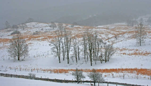 Blue Grass in snowstorm