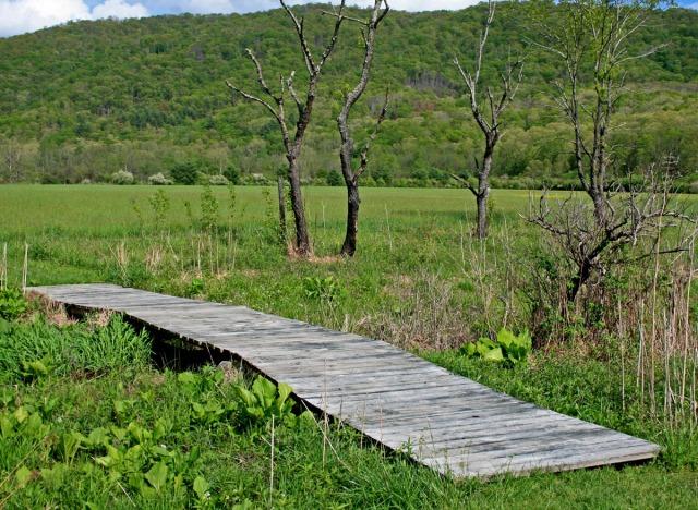 Foot bridge over bog