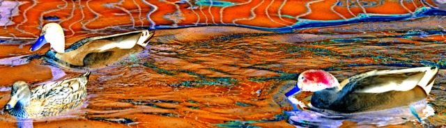 Duck batik