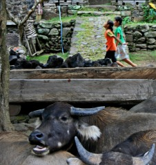 two girls and water buffalo