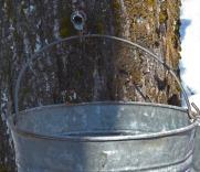 freshly hung bucket