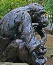 Pondering chimp