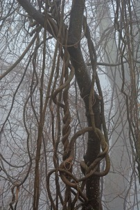 convoluted vines
