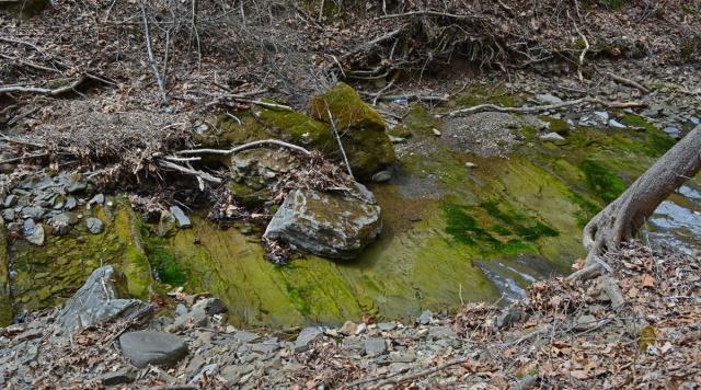 stream with algae