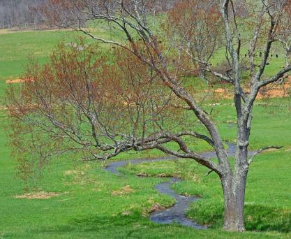 Reddish tree buds