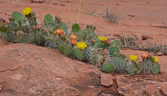 cacti on a ledge