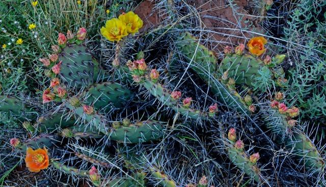 cactus spirals multi-colored