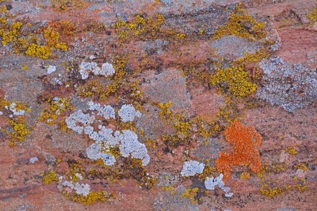 colorful lichen on rockwall