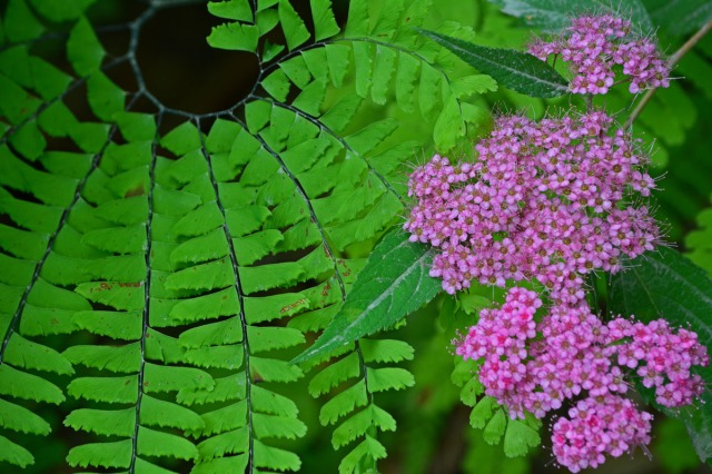 fern and pink flowers
