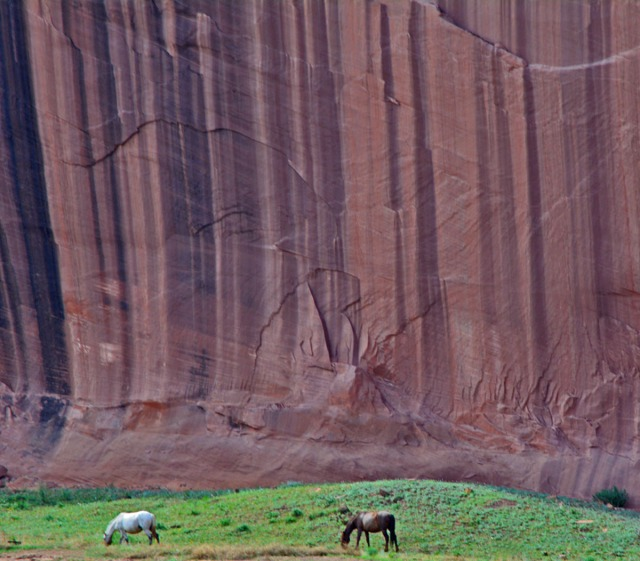 horses dwarfed by canyon wall