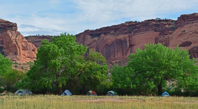 Tents under cottonwood trees