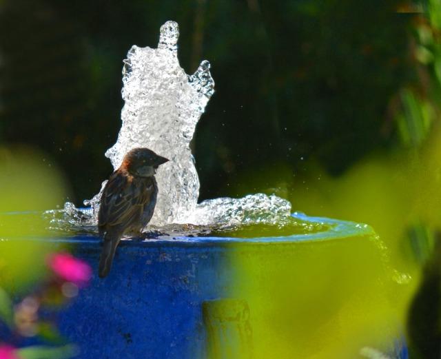 One sparrow