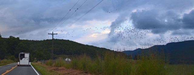 a cloud of birds