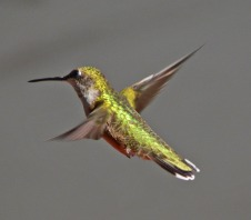 female in midair, highly iridescent