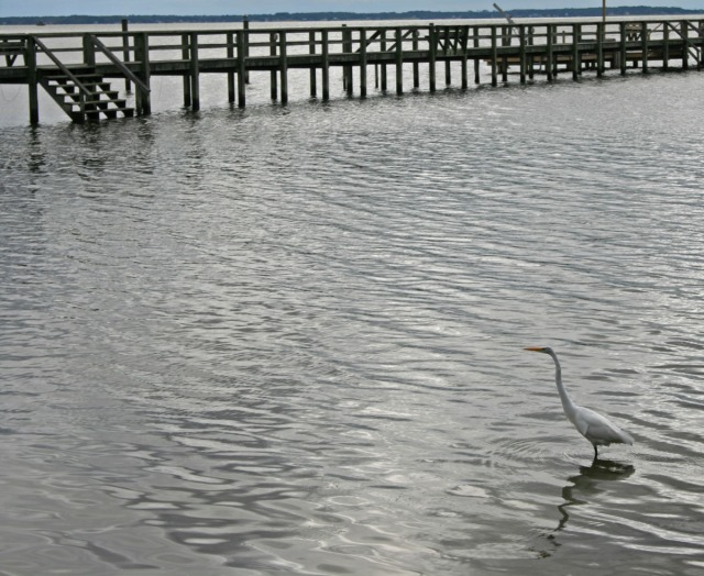 Heron and boardwalk