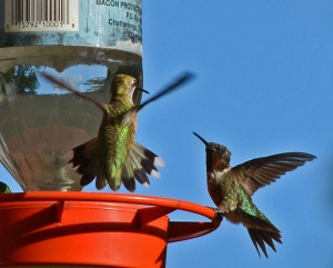 A male and female at the feeder