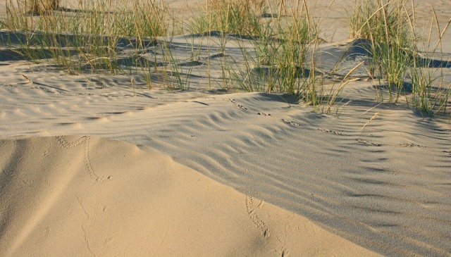 dune in evening light