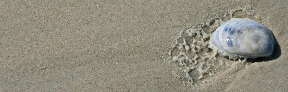 seashell header