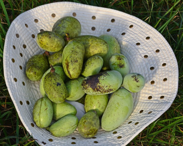 A hat full of pawpaws