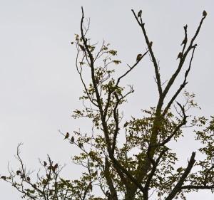 birds in the tree tops