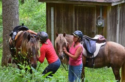 getting the horses ready